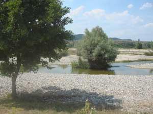 forest oaks for sale southern Bulgaria near greek border Makaza Komoniti Kirkovo