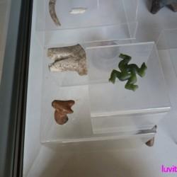kardjali-museum020