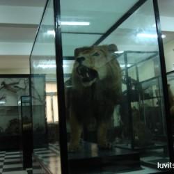 sofia-museum024