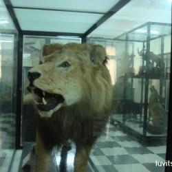 sofia-museum025