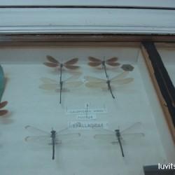 sofia-museum033