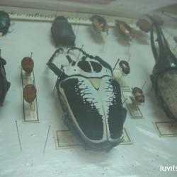 sofia-museum066