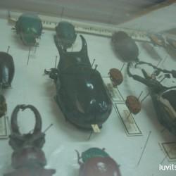 sofia-museum067